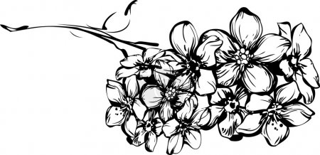 Sketch one sprig with little flowerets