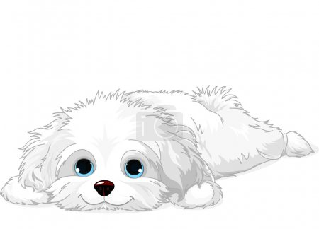 A cute white Havanese puppy laying down...