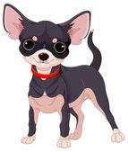 Chihuahua giocoso