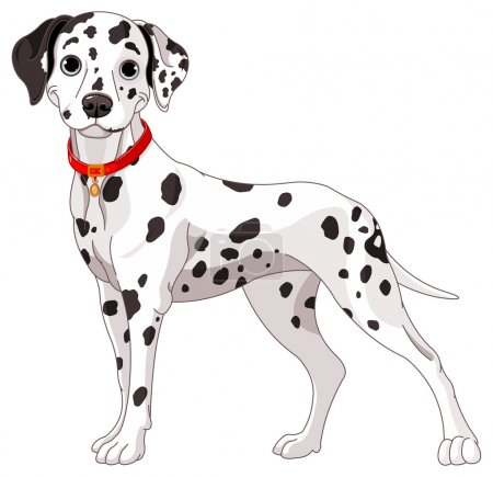 Illustration of a cute Dalmatian dog all attention...
