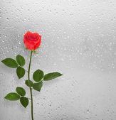 Rote Rosen auf dem Fenster mit Regentropfen