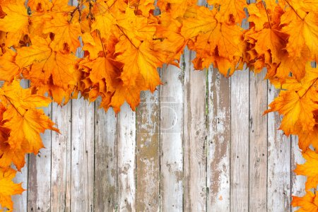 Autumn leaves on old wooden fence