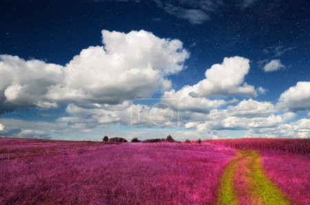 Magic Landscape - Pink Grass Field and Sky with Real Stars