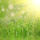 An green field