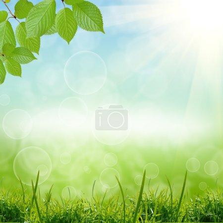 Photo pour Fond de nature verdoyante avec ciel - image libre de droit