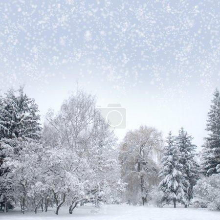 Photo pour Forêt de Noël avec neige, ciel, brouillard - image libre de droit
