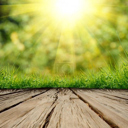 Photo for Spring green grass and sunlight with wood floor - Royalty Free Image