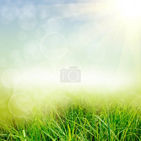 Photo for Green summer nature background - Royalty Free Image