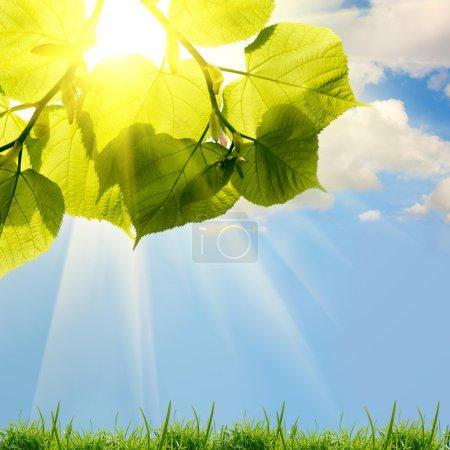 Photo pour Feuilles d'arbres verts d'été sur le fond du ciel - image libre de droit