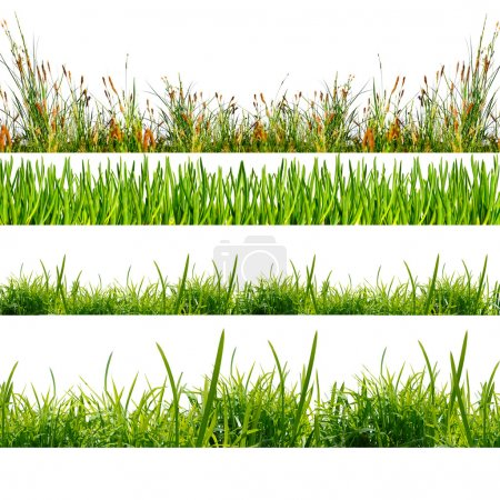 Photo for Green grass on the white background - Royalty Free Image