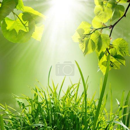 Photo pour Le fond de la nature verdoyante à l'été - image libre de droit