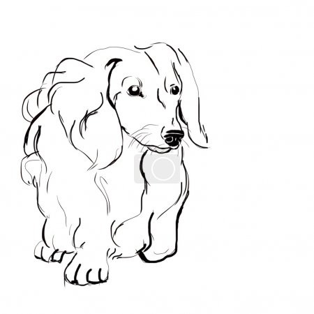 Sketch dog breed long-haired dachshund