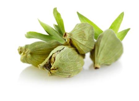 Green cardamom pods on white background...