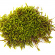 Green moss isolated on white bakground...