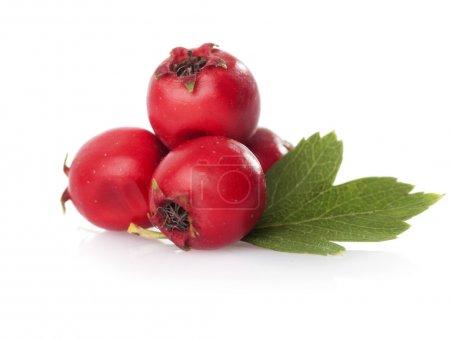 Herbal medicine: Hawthorn