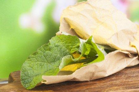 Photo pour Bardane comestible alimentaire naturelle. Arctium lappa, communément appelé bardane, gobo, bardane comestible ou boutons de mendiant en raison de la popularité croissante du régime macrobiotique - image libre de droit