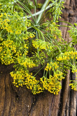 Photo for Fresh dill flowers on old wooden background - Royalty Free Image