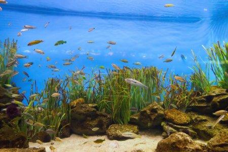 Photo pour Poissons vie tropicale dans le récif corallien - image libre de droit