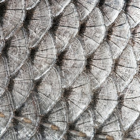 texture scales fish