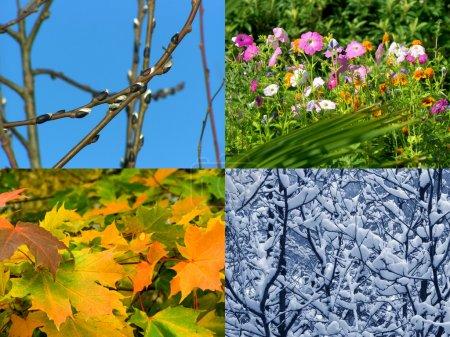 Photo pour Printemps, été, automne et hiver, fond des saisons naturelles - image libre de droit