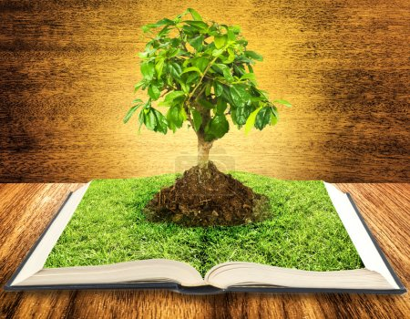 Photo for Tree growing from a book on wooden table - Royalty Free Image