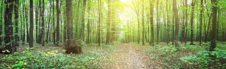Photo for Panorama of a green summer forest - Royalty Free Image