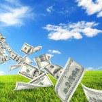 Money tree growing in green meadow...