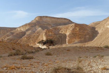 Acacia tree under the hill in the rocky desert at ...