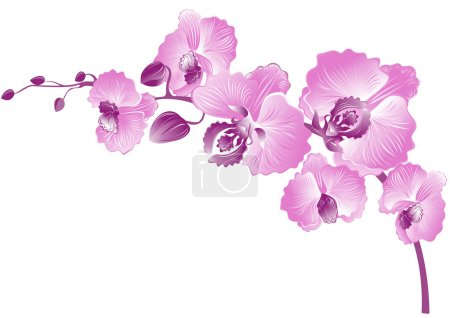 Illustration for Elegance branch of purple orchids. Vector illustration - Royalty Free Image