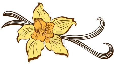 Illustration pour Vanille fleur et gousses de vanille - image libre de droit