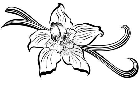Illustration pour Gousses de vanille et fleur - image libre de droit