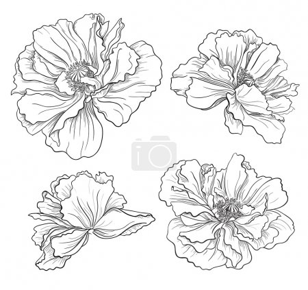 Illustration for Flower hand drawn poppies - Royalty Free Image
