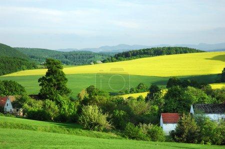 Photo pour Paysage rural polonais au début de l'été - image libre de droit