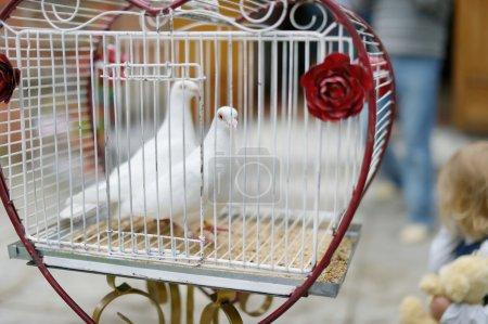 Photo pour Deux colombes comme symbole d'amour au mariage - image libre de droit