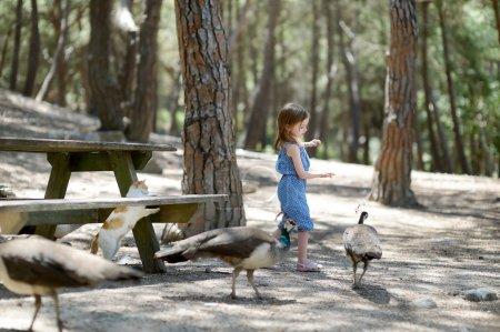 Adorable little girl feeding peacocks