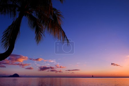 Palm tree silhouette on sunset beach