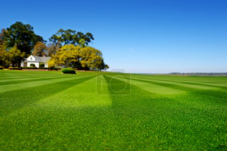 Perfectly striped freshly mowed garden lawn in sum...