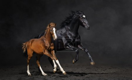 Black mare and her bay foal