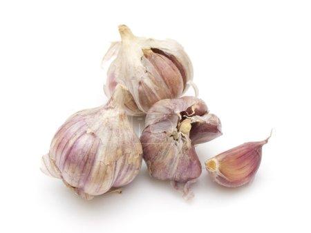 Photo for Garlic on white background - Royalty Free Image