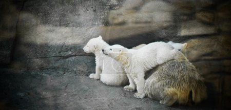 polar she-bear with two kids