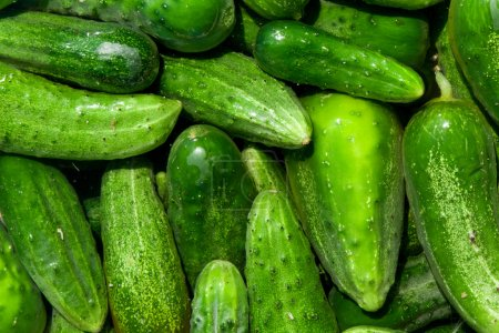 Photo for Green cucumbers, background - Royalty Free Image