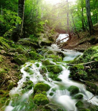 Photo pour Cascade de forêts et de rochers couverts de mousse - image libre de droit