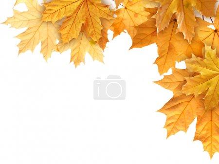 leaves on white