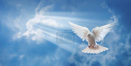 Photo pour Colombes dans l'air avec des ailes grandes ouvertes devant le soleil - image libre de droit