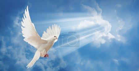 Photo pour Colombe en l'air avec ailes grandes ouvertes en face du soleil - image libre de droit