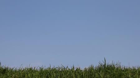 Malá holka jde na zelené trávě