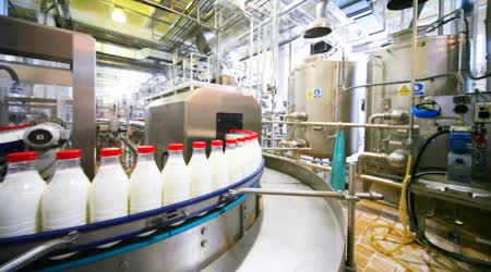 Many bottles milk with red caps move in row on conveyor at factory