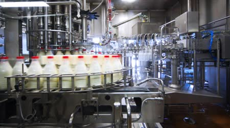 Bottles are washed, dried, filled with milk and close caps in factory conveyor