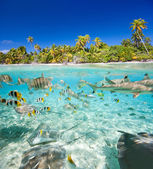 Tropical island above and underwater