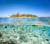 """Постер, картина, фотообои """"Тропический остров выше и подводной"""""""